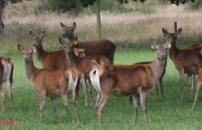 File photo - not actual sale hinds