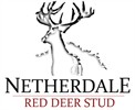 Netherdale Red Deer